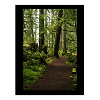 Trail Amongst Giants Postcard