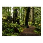 Trail Amongst Giants Postcards