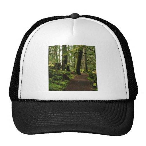 Trail Amongst Giants Trucker Hat