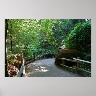 """""""Trail Break"""", Muir Woods Posters"""