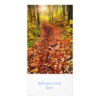 Trail in fall forest photo cards