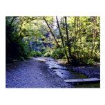 Trail Into Fern Canyon, Prairie Creek - Redwoods S Postcard