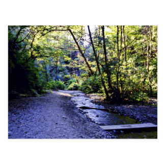 Trail Into Fern Canyon, Prairie Creek - Redwoods S Post Card