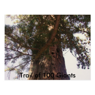 Trail of 100 Giants Postcard