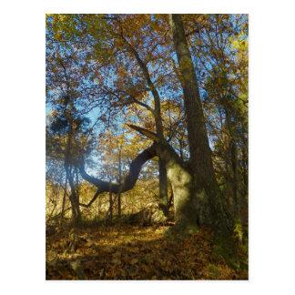 Trail of Tears, Livingston County Ky Postcard
