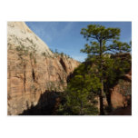 Trail to Angels Landing in Zion National Park Postcard