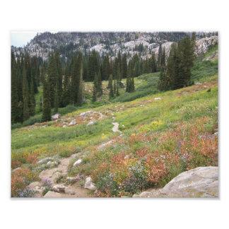 Trail to Blue Lake, Cascade, ID #4014 Photo Print