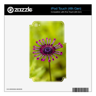 Trailing African honeysuckle iPod Touch 4G Skin