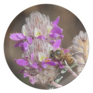 Trailing Indigo Bush with a Bee Party Plates