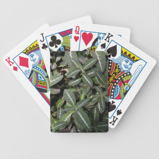Trailing Velvet Plant Playing Cards