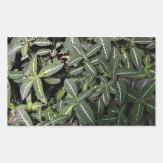 Trailing Velvet Plant Sticker