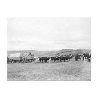 Train of Oxen and Wagons Headed for Black Hills Gallery Wrapped Canvas