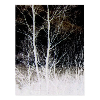 Train of Thought Black & White Forest Landscape Postcard