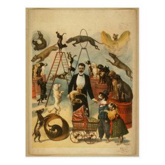 Trained Dog Act - Vintage Dog Circus Postcard