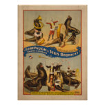 Trained Seals Circus Poster - Forepaugh & Sells