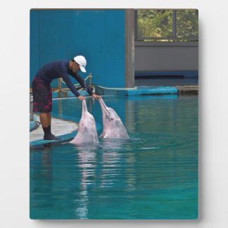 Trainer patting the dolphin during the show plaque