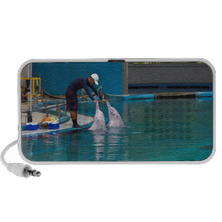 Trainer patting the dolphin during the show travelling speaker