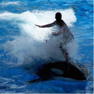 Trainer riding on killer whale orca photograph photo cutout