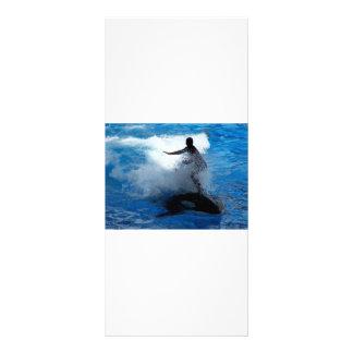 Trainer riding on killer whale orca photograph custom rack cards
