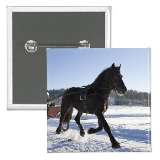 Training of horses in a wintry landscape, 2 inch square button