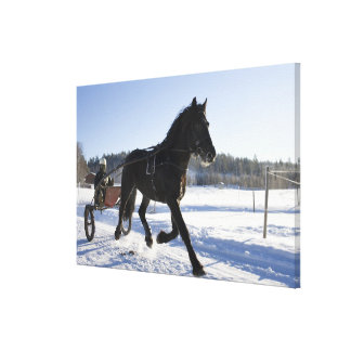 Training of horses in a wintry landscape, canvas print