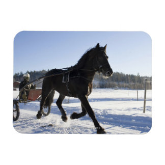 Training of horses in a wintry landscape, rectangular photo magnet