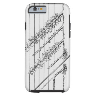 Training young trees, from 'The Fruit Grower's Gui Tough iPhone 6 Case