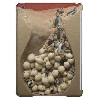 Trama de los huevos de la tortuga del bebé