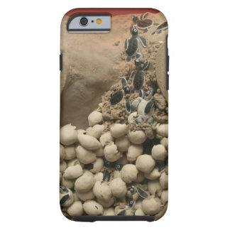 Trama de los huevos de la tortuga del bebé funda de iPhone 6 tough