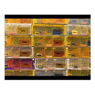 Trampas amarillas de la langosta en Maine Tarjetas Postales