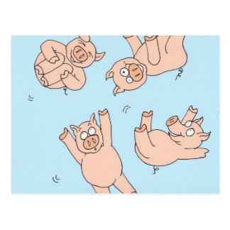 Trampoline Pigs Postcard