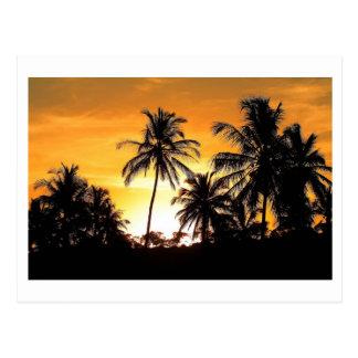 Trancoso Bahia Beach of the Coconut palms Postcard
