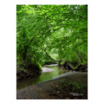 Tranquil Curvy Stream Forest Poster