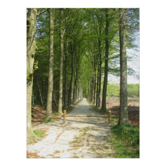Tranquil Forest Road in Sun Photo Poster Art Print