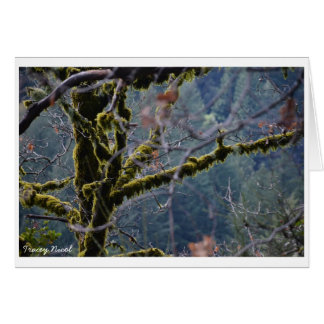 Tranquil landscape of the Santa Cruz mountains Card