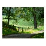 """Tranquil Path"" Summer Landscape Postcards"
