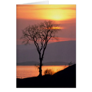 Tranquil Tree in Quebec Greeting Card