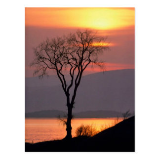 Tranquil Tree in Quebec Postcard