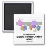Transducción de la señal de la G-Proteína dentro Imán De Frigorífico