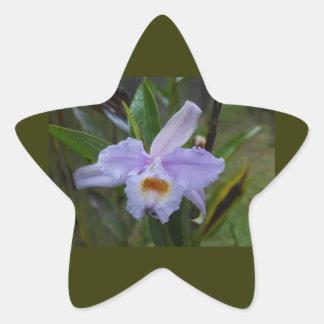 transfer in star, sticker, to sticker