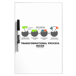 Transformational Process Inside Induced-Fit Model Dry-Erase Whiteboards