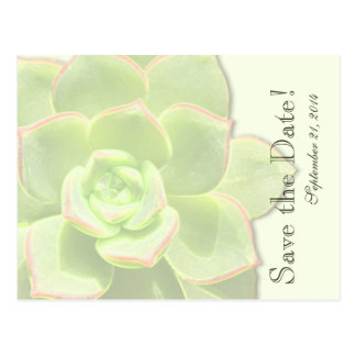 Translucent Green Succulent  save the date Post Cards