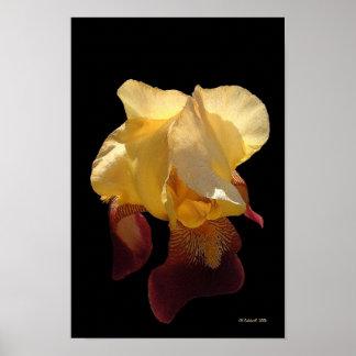 Translucent Iris Poster