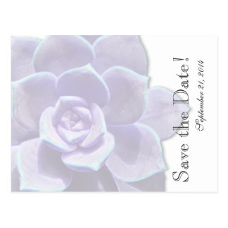 Translucent Lilac Succulent  save the date Postcard