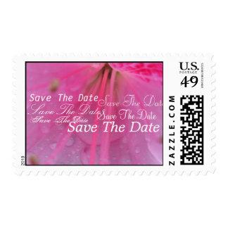Translucent Stamp
