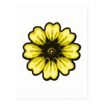 Transp amarillo negro de la margarita los regalos postales