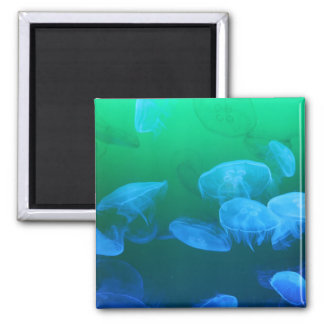 Transparent Jellyfish 2 Inch Square Magnet