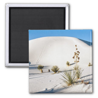 Transverse Dunes and Soaptree Yucca 2 2 Inch Square Magnet