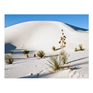 Transverse Dunes and Soaptree Yucca 2 Postcard