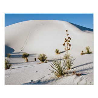 Transverse Dunes and Soaptree Yucca 2 Poster
